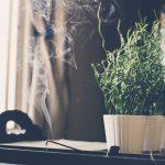 Rituel du bâton de sauge pour purifier l'air pendant la période des fêtes !